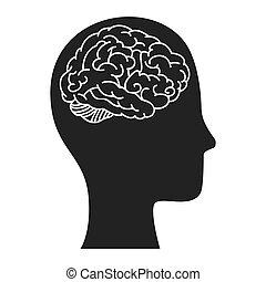 mänsklig, organ, hjärna