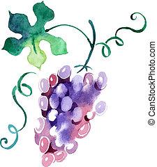 målad, vattenfärg, grape., vektor, illustration