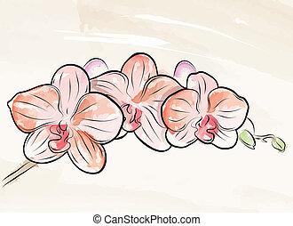 målad, vektor, orkidé