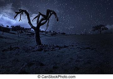 månbelyst, träd
