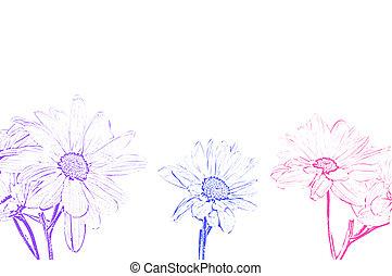 måne, kunst, illustration, shasta daisy