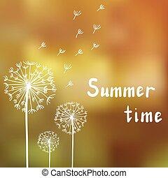 mælkebøtter, sommer, klar, baggrund, drømme
