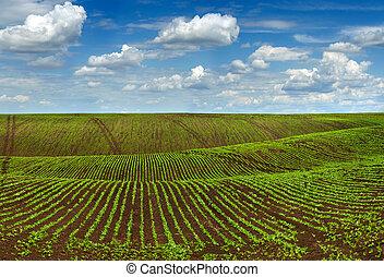 mængder, felt, landbrugs-, bakkerne, landskab, hos, smukke, himmel