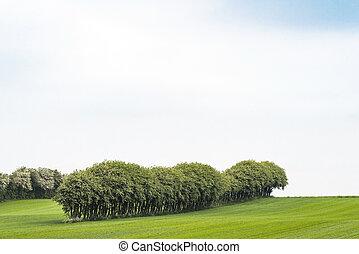 mængder, på, en, træer felt, på, en, række