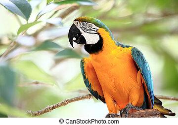 mærkelig, macaw