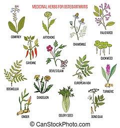 médicinal, arthrose, mieux, herbes