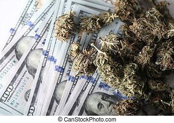 médico, concept., negócio, cannabis, dinheiro, marijuana