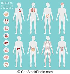 médico, e, cuidados de saúde, infographic
