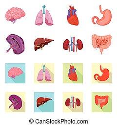médico, human, cobrança, stock., símbolo., corporal, ícone, vetorial, desenho