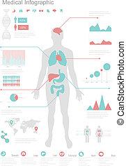 médico, infographic, set.