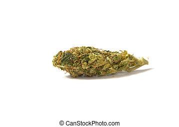 médico, marijuana, broto