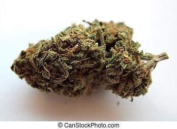 médico, marijuana, kimber