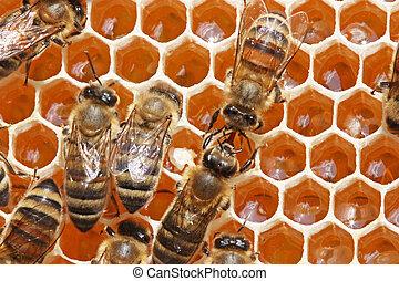 médico, vida, insects., néctar, transformación