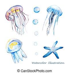 méduse, aquarelle, illustration.
