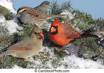mélangé, troupeau, oiseaux