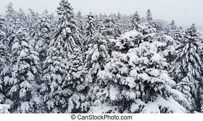 mélangé, vue, forêt, snow., bas, chute neige, hiver, pins, 4k, aérien, branches, pendant, voler, neigeux, passé, grand, sur, stupéfiant