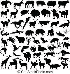 mélange, animal, illustration
