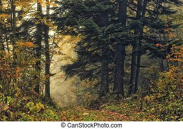 mély, erdő