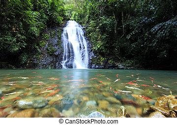 mély, erdő, vízesés, alatt, nong, khai, thaiföld