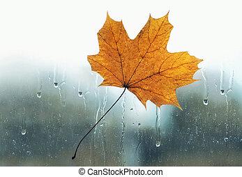 météorologie, prévision, concept, feuille, verre, saison, -, jaune, automne, collé, fenêtre, temps, pluie, mouillé, gouttes, érable