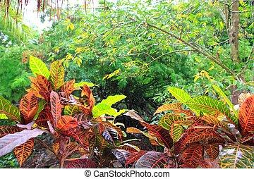 méxico central, yucatán, selva, rainforest, américa