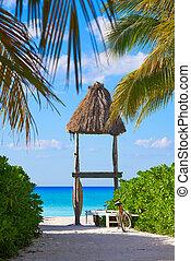 méxico, isla, árbol, chozas, holbox, palma