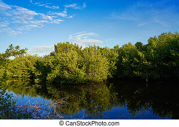 México, isla,  mangroove,  holbox,  quintana,  roo