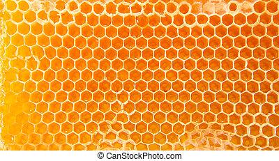 méz, sör, honeycombs.
