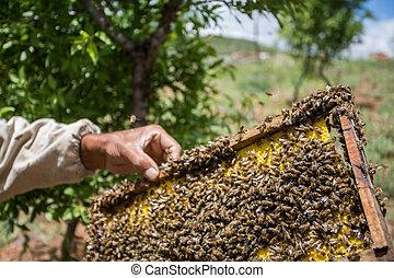 méz, termelés