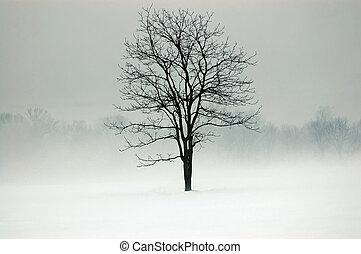 místico, árvore