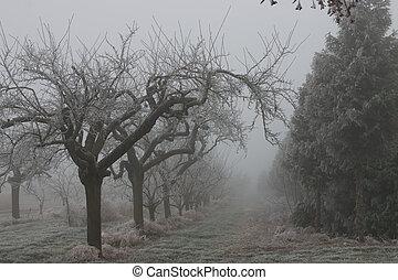 místico, árvores, em, inverno