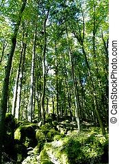 místico, floresta, quadro