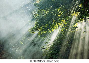 místico, raios luz solar, em, árvores