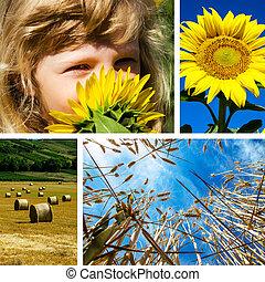 m�dchen, und, sonnenblume, collage