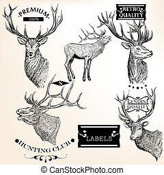 mód, állatok, retro, gyűjtés, vektor, abels, kéz, húzott
