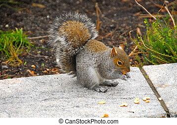mókus, közül, a, central dísztér, ny megállapít
