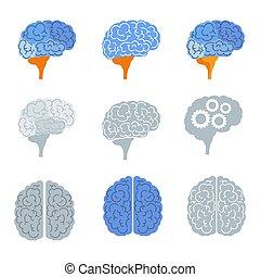 mózg, komplet, górny, ikony, kolor, prospekt, prospekt., bok