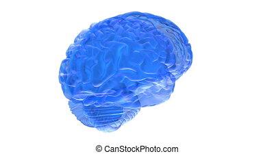 mózg, ludzki, render, 3d