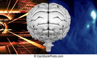mózg, ludzki, tło, podzielony, kto