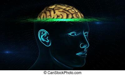 mózg mają rytm