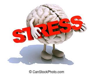 mózg, obejmuje, słowo, siła, ludzki