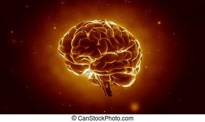 mózg, pulsowanie, cielna, silny
