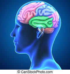 mózg, strony