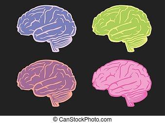 mózg, wektor, komplet, ludzki, ilustracja