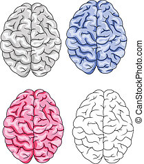 mózg, wektor