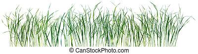 mönster, gräs, isolerat, struktur