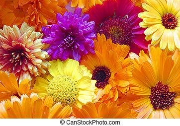 mönster, mång-, blomningen, färgad fond