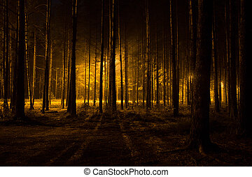 mørke, skov