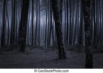 mørke, tågede, skov