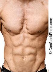 músculo, abdominal, homem jovem